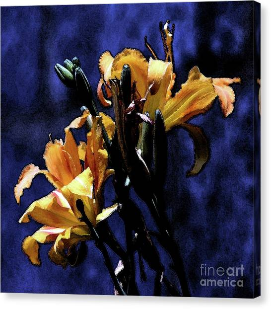 The Life And Death Of A Lily Canvas Print