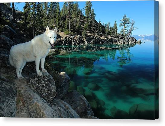 Canvas Print featuring the photograph The Light Of Lake Tahoe by Sean Sarsfield
