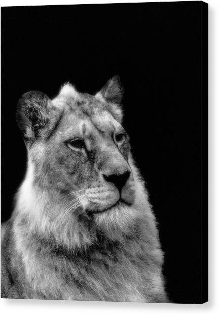 The Lioness Sitting Proud Canvas Print