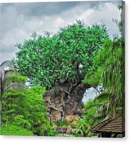 Prince Canvas Print - The Living Tree Walt Disney World Mp by Thomas Woolworth
