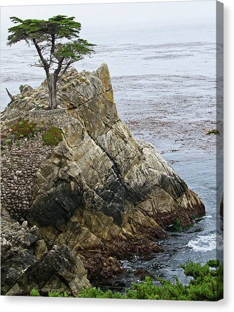 The Lone Cypress - California Canvas Print