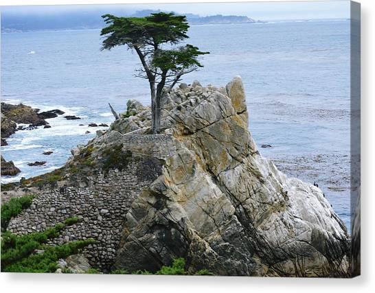 The Lone Cypress Canvas Print