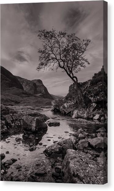 The Lone Tree Of Glencoe Canvas Print by Ben Spencer