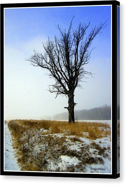 The Lone Tree Canvas Print by Trina Prenzi