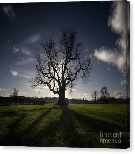 The Lonely Tree Canvas Print by Angel Ciesniarska