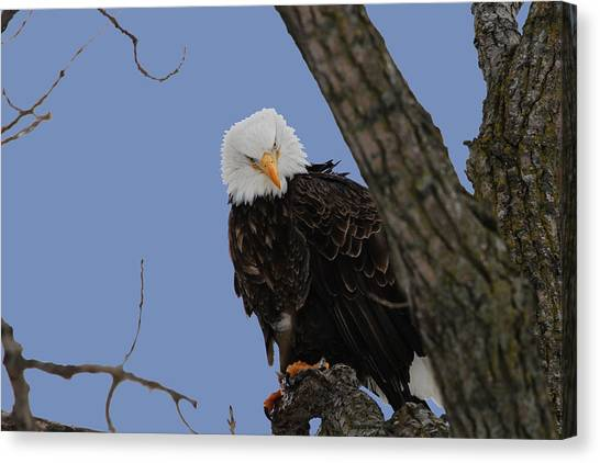 The Look Canvas Print by Dave Clark