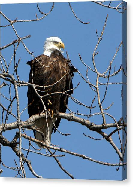 The Lookout Canvas Print by Dave Clark