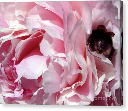 The Lost Bee 2 Canvas Print