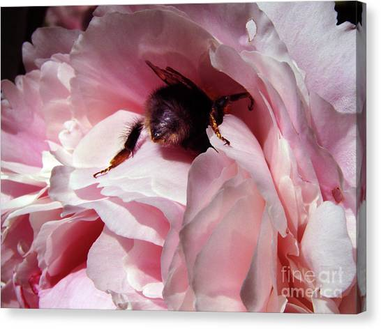 The Lost Bee  Canvas Print