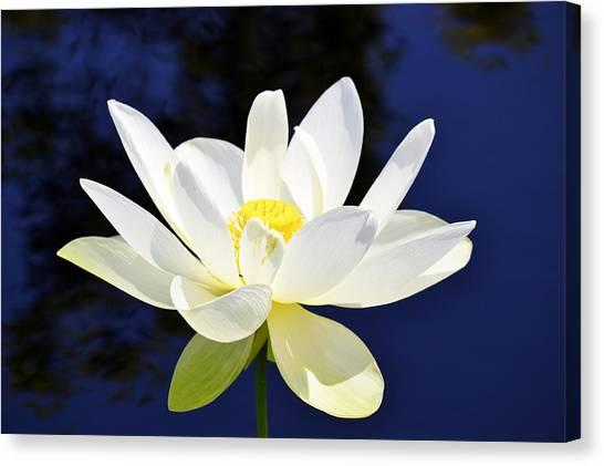 The Lotus  Canvas Print