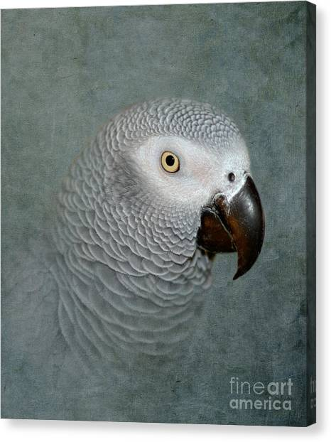 The Love Of A Gray Canvas Print