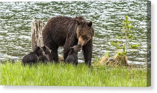 The Love Of Mama Bear Canvas Print
