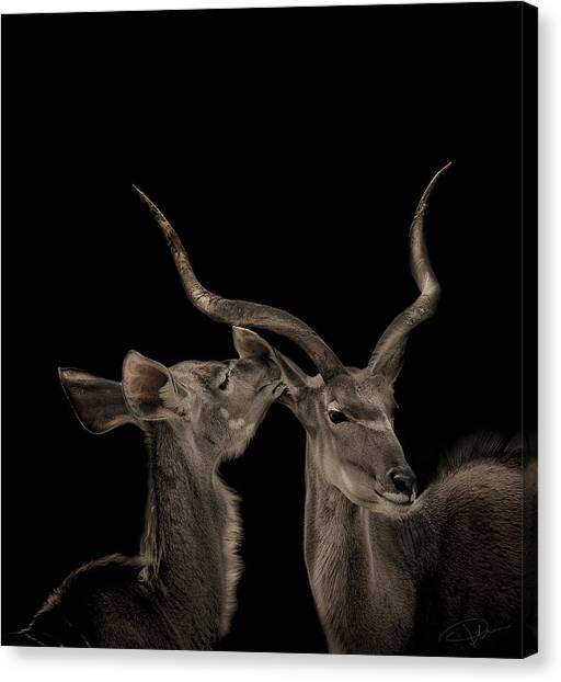 Lovers Canvas Print - The Lovers by Paul Neville
