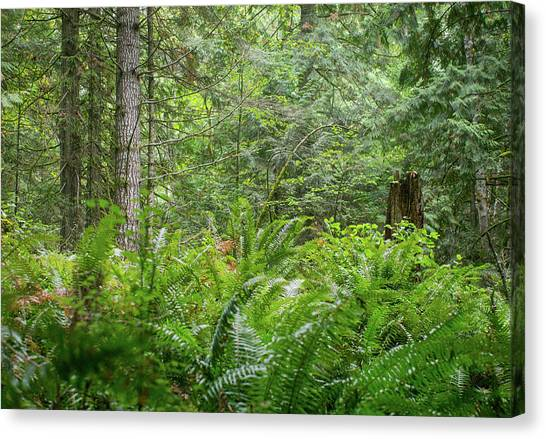The Lush Forest Canvas Print