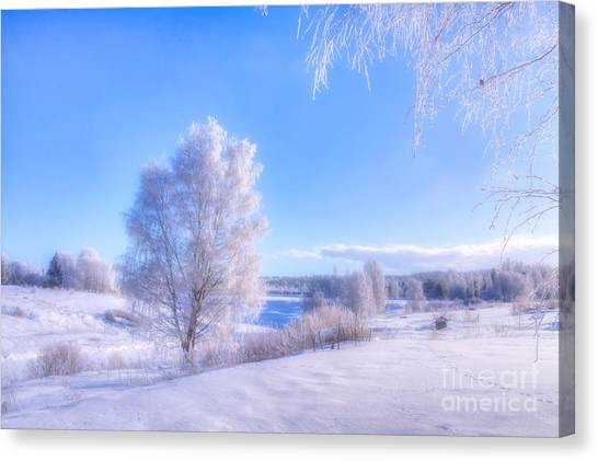 Birch Canvas Print - The Magic Of Winter 3 by Veikko Suikkanen