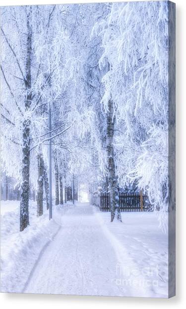 Birch Canvas Print - The Magic Of Winter 6 by Veikko Suikkanen