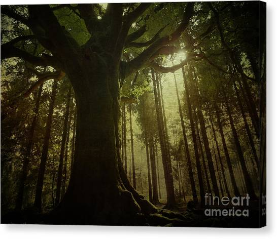 The Magical Beech Canvas Print