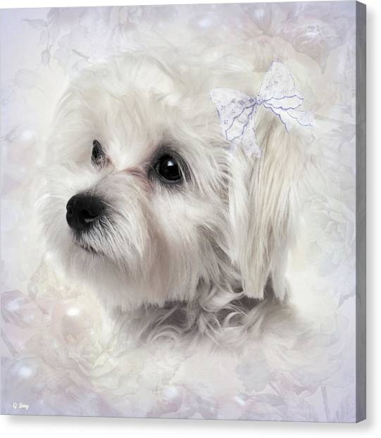 Maltese Canvas Print - The Maltese by G Berry