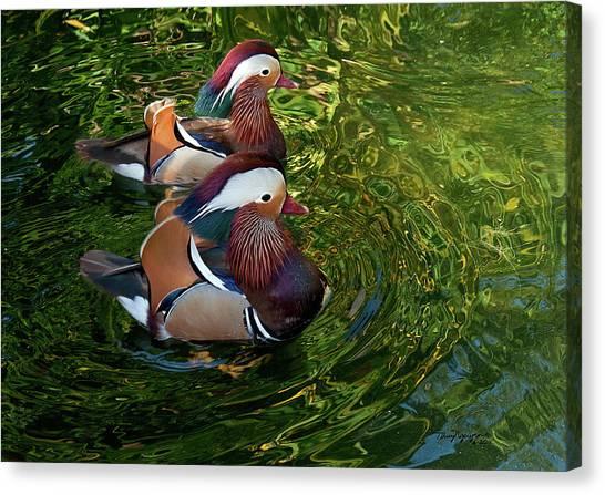 The Mandarin Brothers Canvas Print