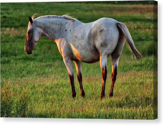 The Mare Canvas Print