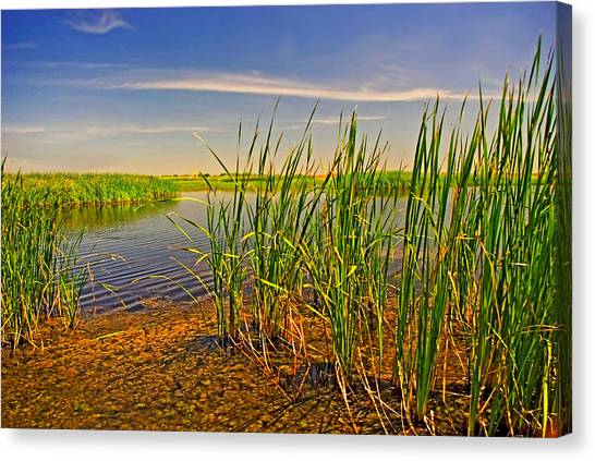 The Marshes Of Brazoria Canvas Print