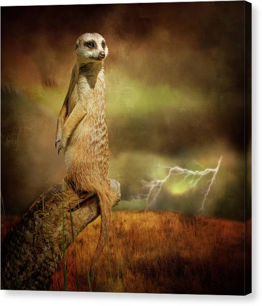 Meerkats Canvas Print - The Meerkat And The Storm by Margaret Goodwin