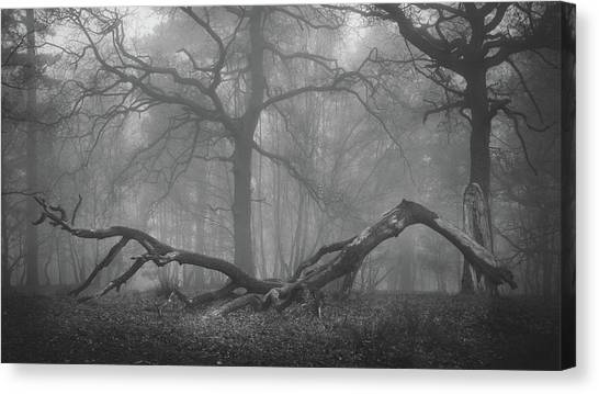 Sherwood Forest Canvas Print - The Mighty Fallen by Chris Dale