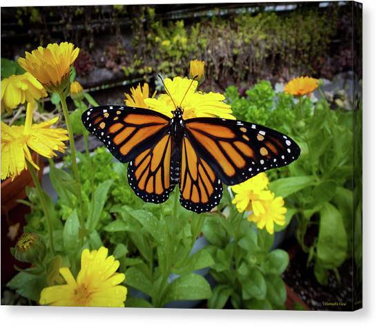 The Mighty Monarch  Canvas Print