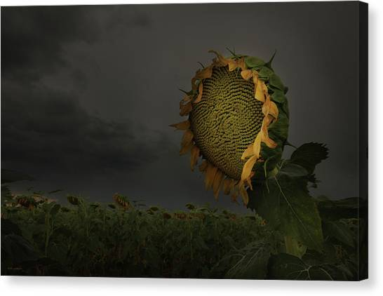 A Sign Of Hope Among A Crowd Of Despair Canvas Print