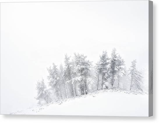 The Minimal Forest Canvas Print