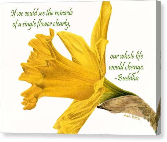 Daffodils Canvas Print - The Miracle Of A Single Flower by Sarah Batalka