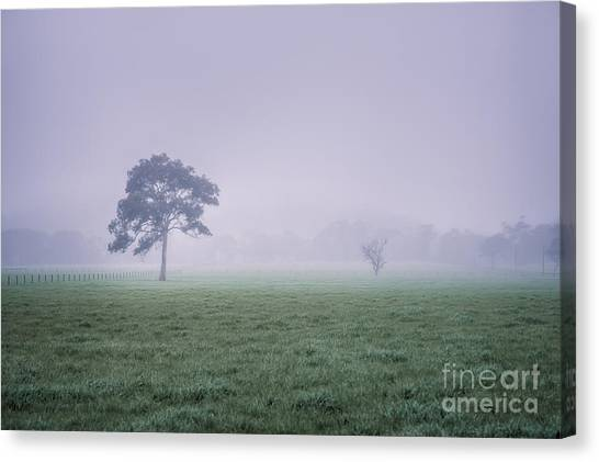 Canvas Print featuring the photograph The Mist Settles by Ray Warren