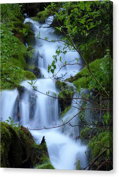 The Misty Brook Canvas Print