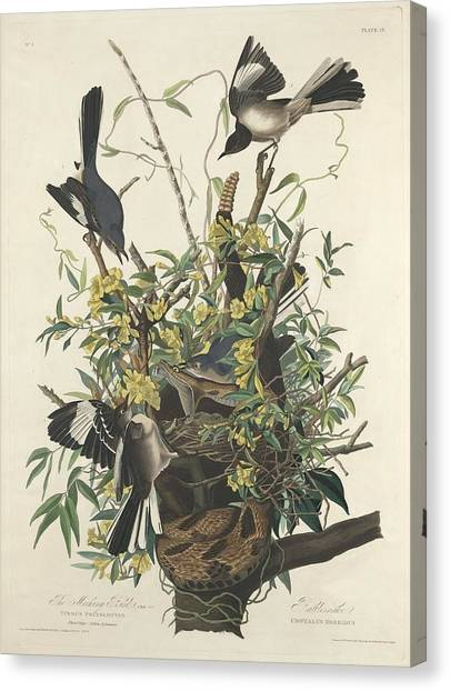 Mockingbird Canvas Print - The Mockingbird by Dreyer Wildlife Print Collections
