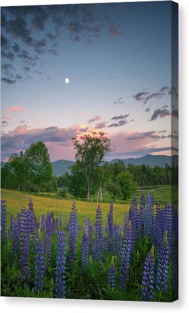 The Moon Rises Above Canvas Print