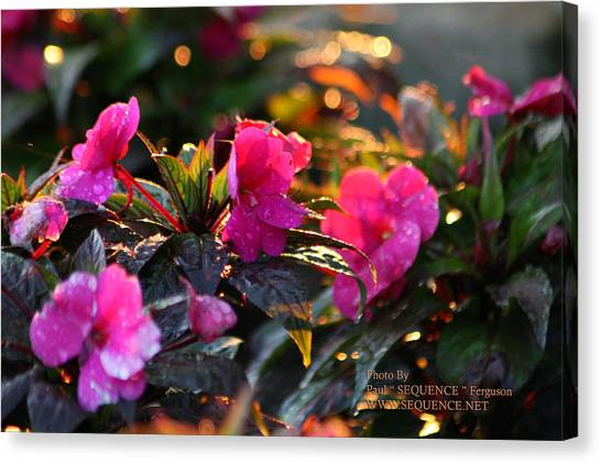 The Morning Flower Canvas Print