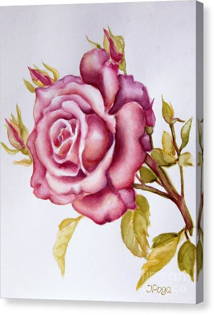 The Morning Rose Canvas Print