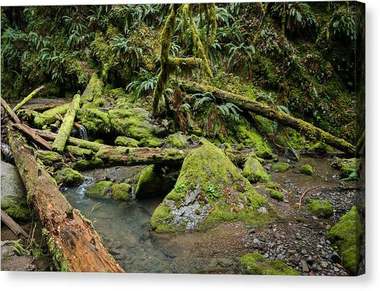 University Of Oregon Uo Canvas Print - The Mossy River by Margaret Pitcher