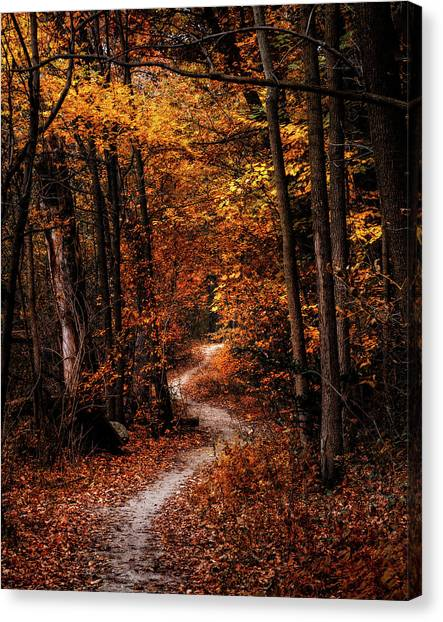 Amber Canvas Print - The Narrow Path by Scott Norris