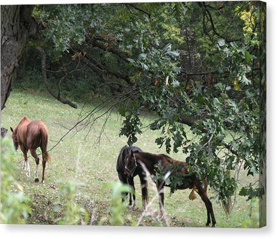 The Neighbors Horses Canvas Print by Janis Beauchamp