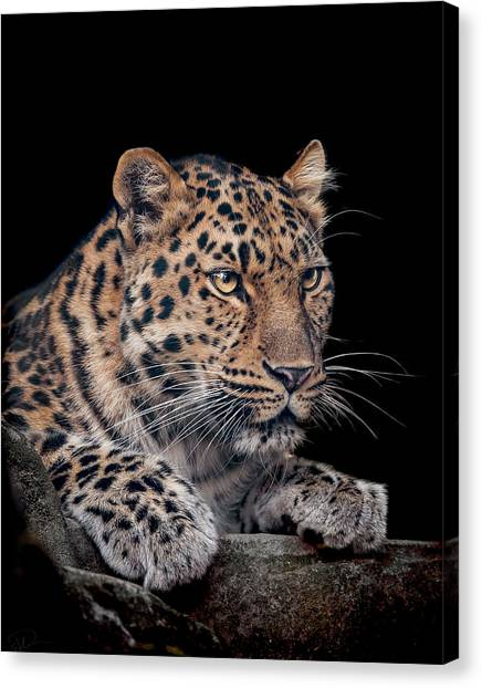 Leopard Canvas Print - The Night Watchman by Paul Neville