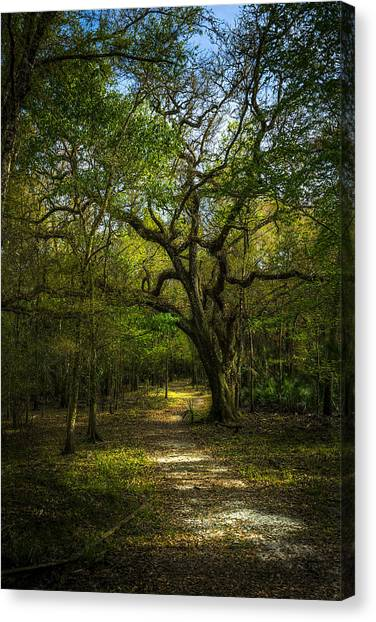 Inland Canvas Print - The Oak Trail by Marvin Spates