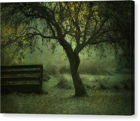 The Old Apple Tree Canvas Print