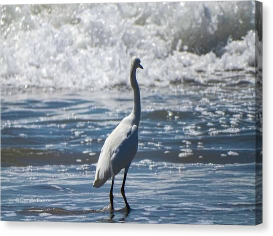 Egret And The Waves Canvas Print