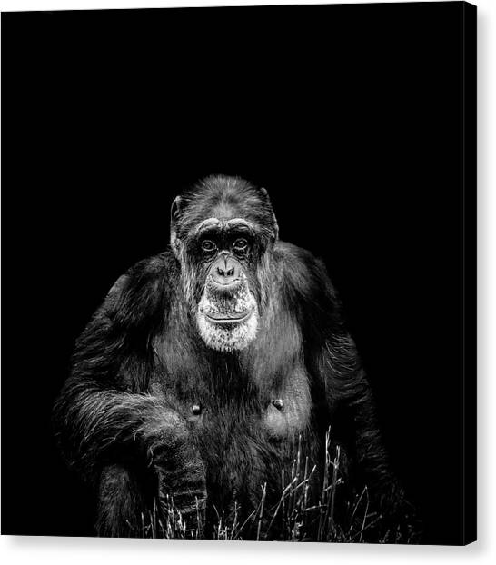 The Old Boy Canvas Print