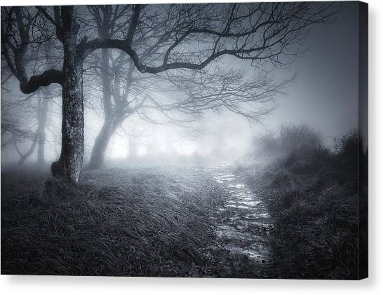 The Old Forest Canvas Print