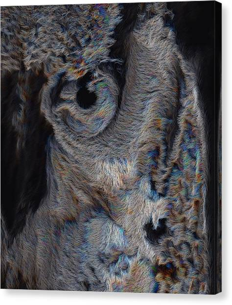 The Old Owl That Watches Canvas Print