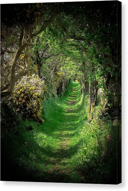 The Old Road Canvas Print by Cat Shatwell