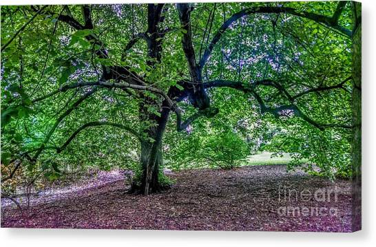 The Old Tree At Frelinghuysen Arboretum Canvas Print
