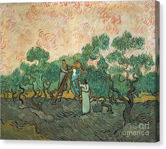 Olive Oil Canvas Print - The Olive Pickers by Vincent van Gogh
